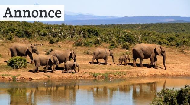 Tag til forbløffende Afrika