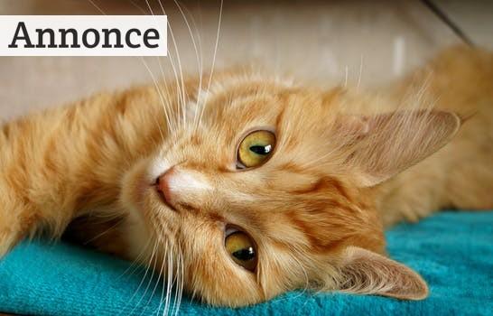 5 ting din kat skal have